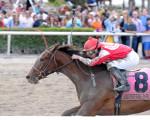 Birdatthewire wins the Gulfstream Park Oaks