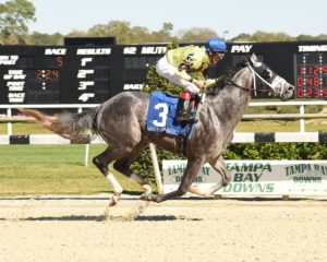 Destin Winning the 2016 Sam F. Davis Stakes